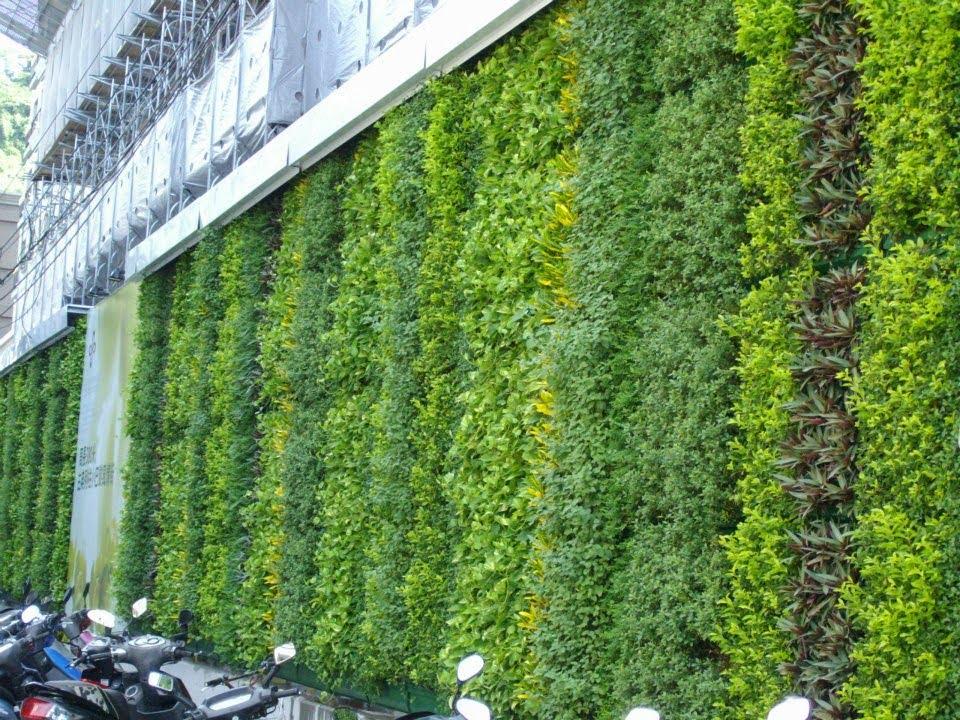Kết quả hình ảnh cho Vườn tường nhà phố