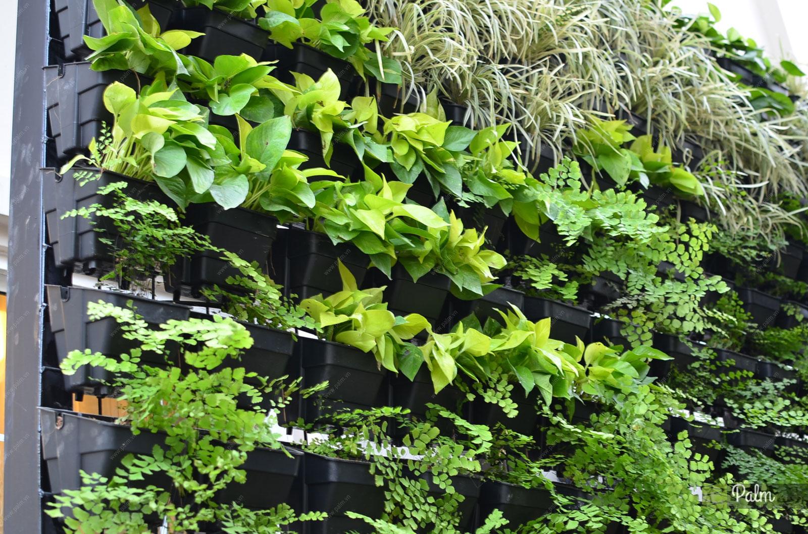 Thiết kế thi công vườn tường xanh thẳng đứng